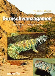 Dornschwanzagamen